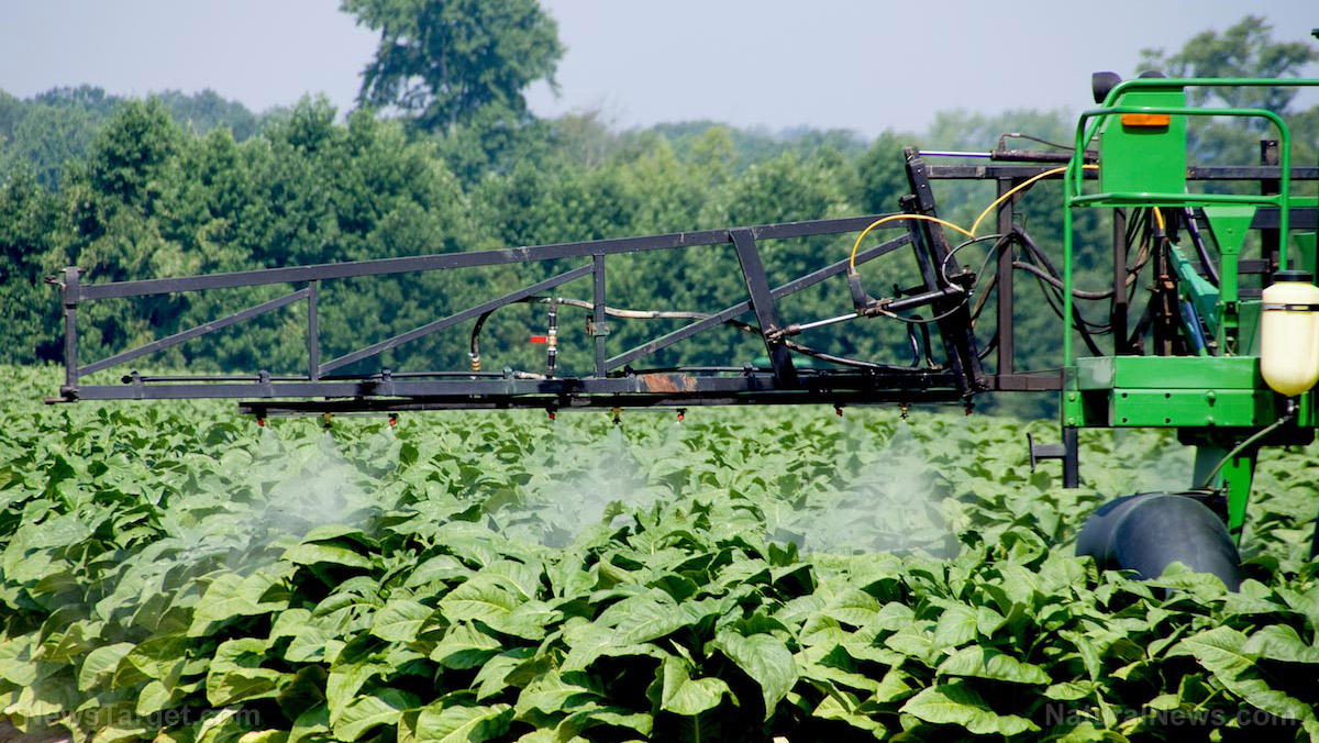 New health threat from tobacco: Researchers plan to grow it for