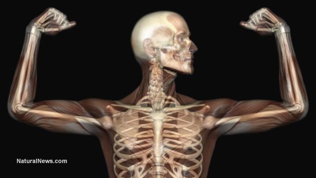 Crushed Human Bone : Israeli company successfully transplanted lab grown bones